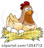 Happy Hen Nesting On Eggs