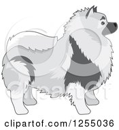 Cute Keeshond Dog In Profile