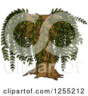 Clipart Of A Willow Tree Royalty Free Vector Illustration by dero