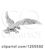 Clipart Of A Black And White Eagle Flying With Talons Out Royalty Free Vector Illustration by AtStockIllustration