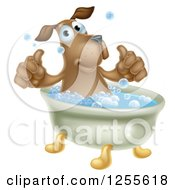 Pleased Brown Dog Bathing And Holding Two Thumbs Up
