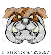 Clipart Of A Tough Bulldog Face Royalty Free Vector Illustration by AtStockIllustration