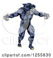 Clipart Of A Muscular Panther Man Mascot Attacking Royalty Free Vector Illustration