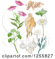 Clipart Of A Herbal Plants Royalty Free Vector Illustration
