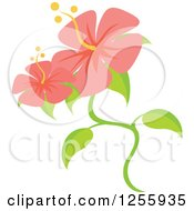 Clipart Of Pink Hibiscus Flowers Royalty Free Vector Illustration