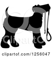 Black Silhouetted Airedale Terrier Dog Waiting With A Leash