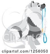 Cute Keeshond Dog Sitting With A Leash