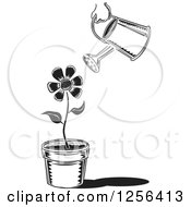 Clipart Of A Black And White Can Watering A Potted Flower Royalty Free Vector Illustration