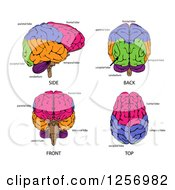 Different Angles Of Human Brains And Labels