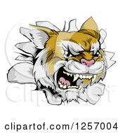 Clipart Of A Wild Cat Breaking Through A Wall Royalty Free Vector Illustration