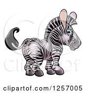 Cute Zebra Looking Back