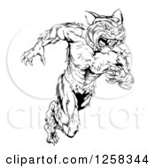 Clipart Of A Black And White Fierce Muscular Running Tiger Man Mascot Royalty Free Vector Illustration