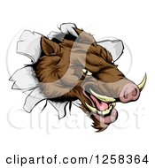 Clipart Of An Aggressive Boar Mascot Breaking Through A Wall Royalty Free Vector Illustration