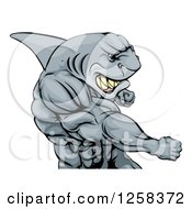 Clipart Of A Mad Muscular Shark Man Mascot Punching Royalty Free Vector Illustration by AtStockIllustration