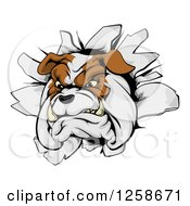 Clipart Of A Tough Bulldog Breaking Through A Wall Royalty Free Vector Illustration