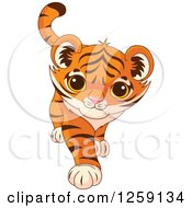 Clipart Of A Cute Playful Tiger Cub Walking Royalty Free Vector Illustration
