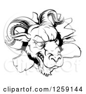 Clipart Of A Black And White Angry Ram Breaking Through A Wall Royalty Free Vector Illustration