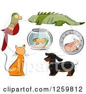 Parrot Iguana Fish Bowl Hamster Ginger Cat And Dachshund Dog