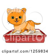 Happy Ginger Tabby Cat Using A Litter Box