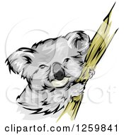 Clipart Of A Koala On A Branch Mascot Royalty Free Vector Illustration by BNP Design Studio