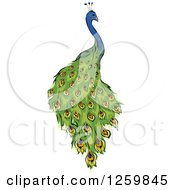 Clipart Of A Peacock Mascot Royalty Free Vector Illustration by BNP Design Studio