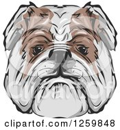 Clipart Of A Bulldog Face Mascot Royalty Free Vector Illustration by BNP Design Studio