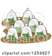 Clipart Of Plants Under Glass Cloches Royalty Free Vector Illustration