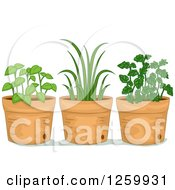 Clipart Of Potted Herb Plants Royalty Free Vector Illustration