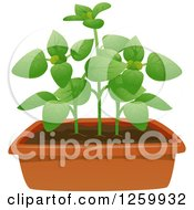 Clipart Of A Potted Oregano Plant Royalty Free Vector Illustration