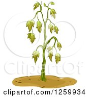Clipart Of A Wilting Plant Royalty Free Vector Illustration