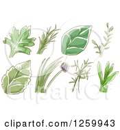 Clipart Of Sketched Herb Leaves And Plants Royalty Free Vector Illustration