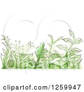 Clipart Of A Border Of Green Herbs Royalty Free Vector Illustration