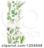 Clipart Of A Border Of Herbs And Flowers Royalty Free Vector Illustration