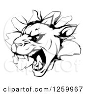 Clipart Of A Black And White Panther Breaking Through A Wall Royalty Free Vector Illustration