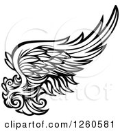Black And White Feathered Wing