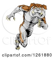 Clipart Of A Muscular Aggressive Bulldog Mascot Running Upright Royalty Free Vector Illustration