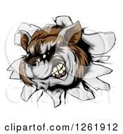 Clipart Of An Aggressive Raccoon Breaking Through A Wall Royalty Free Vector Illustration