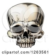 Clipart Of A Vintage Human Skull Royalty Free Vector Illustration by AtStockIllustration