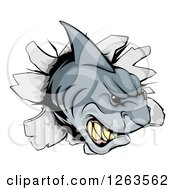Clipart Of An Aggressive Shark Breaking Through A Wall Royalty Free Vector Illustration by AtStockIllustration