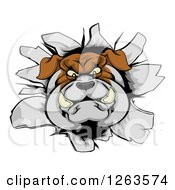 Clipart Of A Bulldog Breaking Through A Wall Royalty Free Vector Illustration