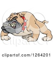 Clipart Of A Tough Snarling Brown Bulldog Royalty Free Vector Illustration by Dennis Holmes Designs