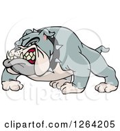 Clipart Of A Tough Snarling Gray Bulldog Royalty Free Vector Illustration by Dennis Holmes Designs