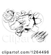 Clipart Of A Black And White Aggressive Clawed Boar Mascot Breaking Through A Wall Royalty Free Vector Illustration