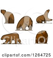 Clipart Of Brown Bears Royalty Free Vector Illustration