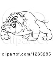 Black And White Aggressive Snarling Bulldog