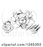 Clipart Of A Black And White Ferocious Wolf Slashing And Breaking Through A Wall Royalty Free Vector Illustration by AtStockIllustration