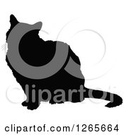 Black Silhouetted Sitting Cat