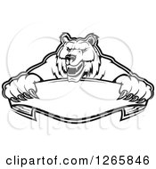 Black And White Bear Holding A Blank Ribbon Banner