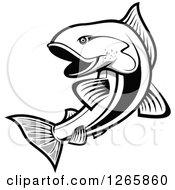 Black And White Salmon Fish
