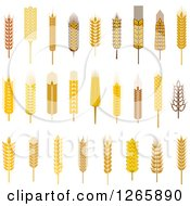 Clipart Of Wheat And Grains Royalty Free Vector Illustration